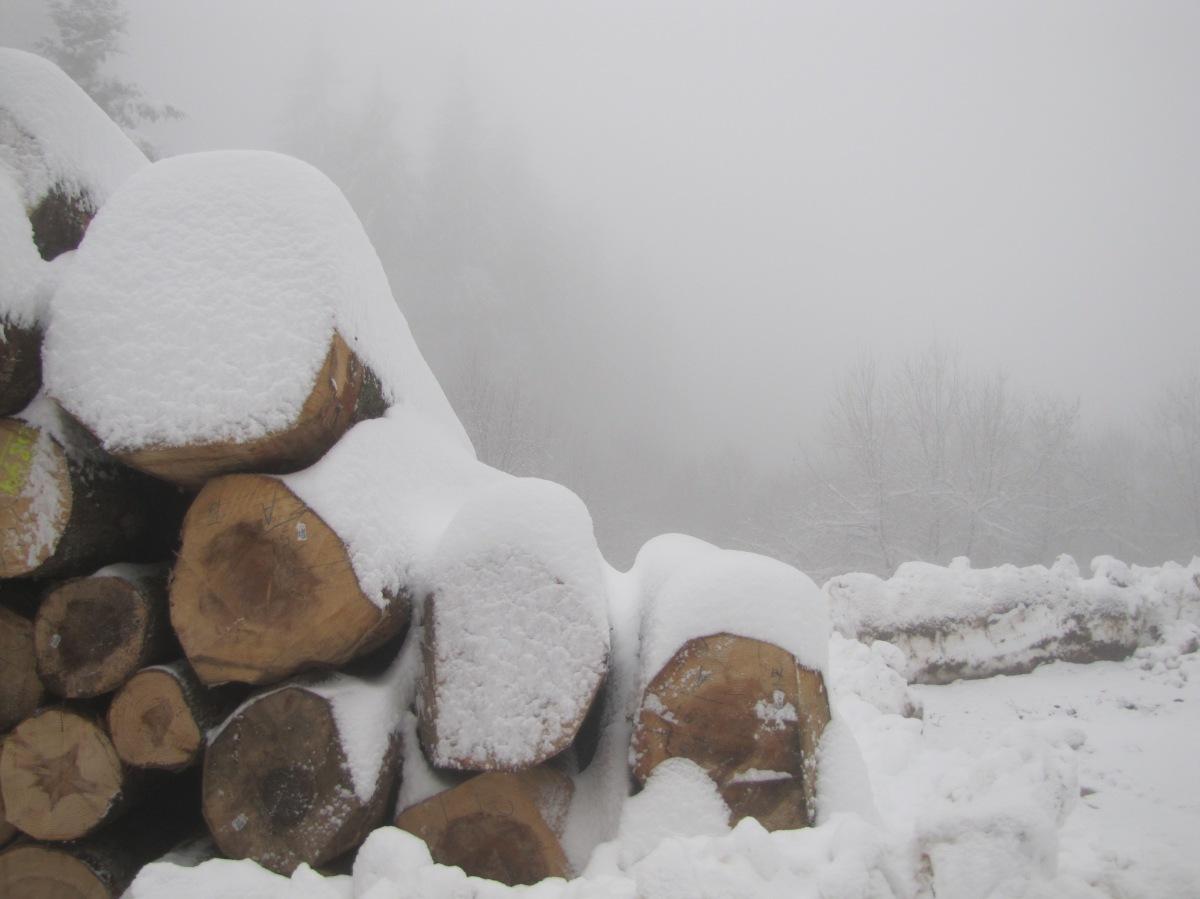 Wintereinbruch ins Flachland